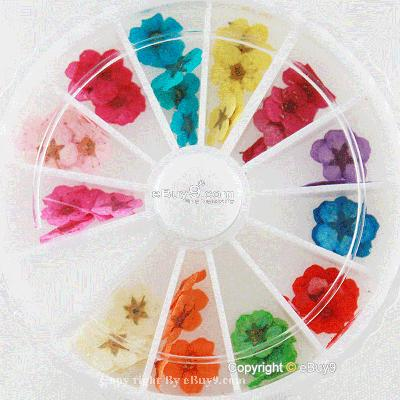 12 Color Wheel Dried Flower Nail Art Decorations Lhaw-As picture